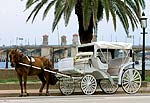 Horse-drawn Carriage Stopped near the Bridge of Lions in St. Augustine