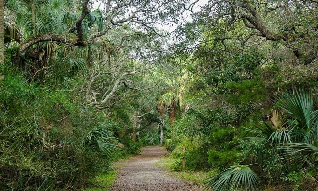 Nature trails in St. Augustine, Florida