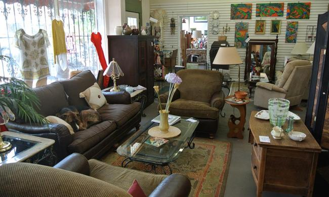 Ayla's Acres Thrift Shop carries an incredible array of furniture, clothing, and yes, even pets.