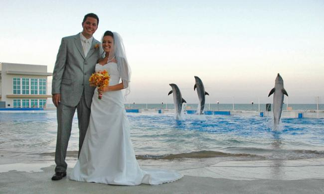 Marineland Dolphin Adventure offers a truly unique venue for a spectacular wedding.