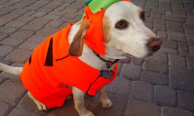 Halloween Costume Dog Parade Quot Dogs Helping Cats Quot Visit