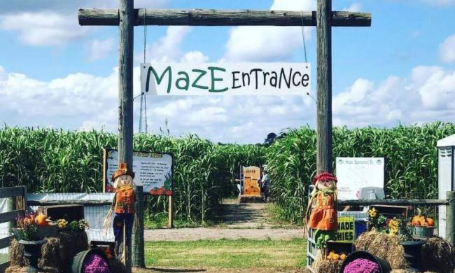 The popular corn maze at Sykes Family Farms in Elkton, FL.