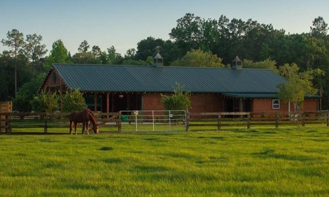 A horse grazing at Kelly Farm in St. Augustine, FL