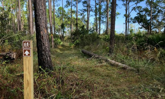 The Flatwoods Loop Trail in the Matanzas State Forest in St. Augustine.