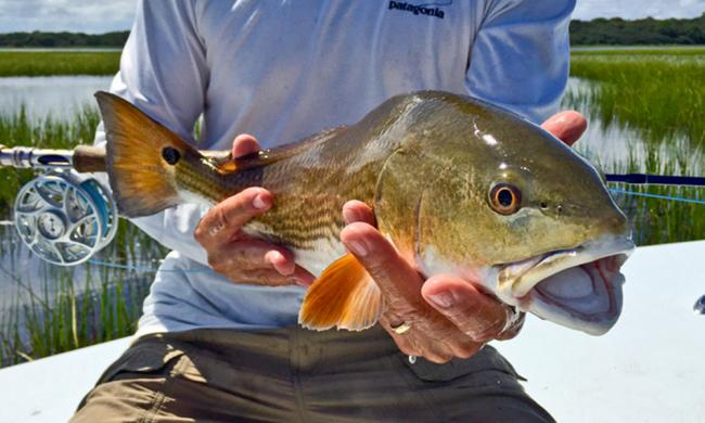 Expert fly fishing guides will take guests throughout the coastal waters of St. Augustine.