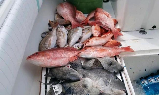 Pile of fish caught by On A Mission Sportfishing