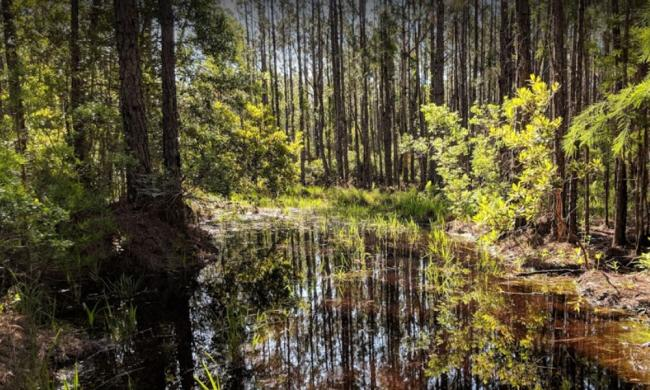 A view along the trail at Twelve Mile Swamp in St. Augustine; photo taken by Brian Hunter.