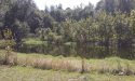 Yarborough tract pond in the Deep Creek Conservation Are