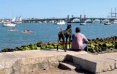 A dog and his friend, enjoying the view along the bayfront in St. Augustine.