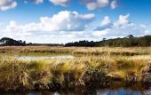 Celebrate National Estuaries Week with at this free festival for the whole family at GTM Research Reserve.