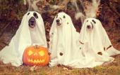 Post a photo of your pooch in costume to enter this Facebook Halloween contest.