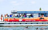 Guests aboard a Florida Water Tours will often see dolphins swimming in the waters of in St. Augustine.
