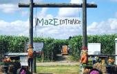 Maze Entrance at Sykes Family Farms in Elkton, Florida