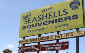 Since 1970, Tom's Seashells & Souvenirs has been greetiing visitors in St. Augustine, FL.